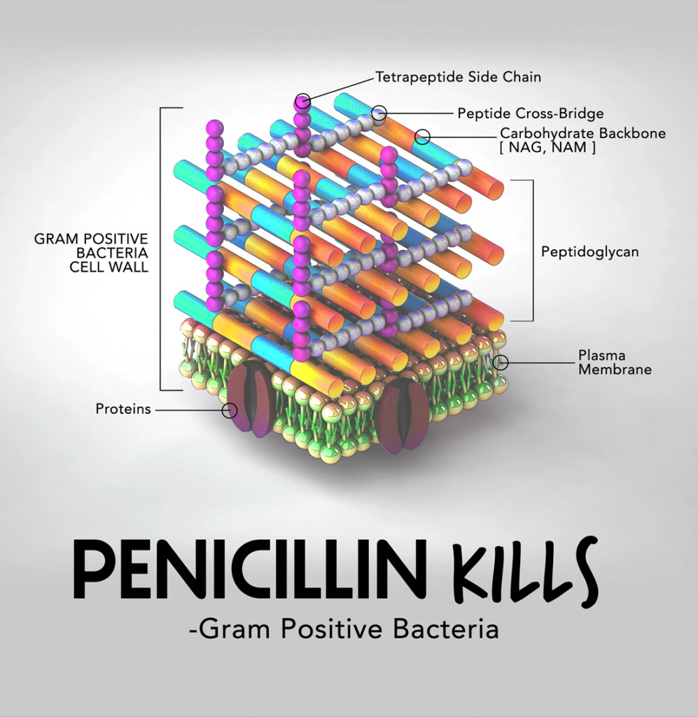 Gram Positive 3D illustration with diagram infographic
